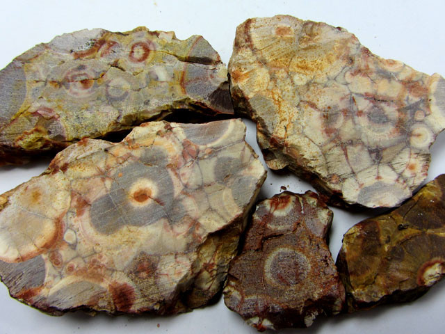220 GRAMS SLICED BIRDS EYE AGATE ROUGH MS1401