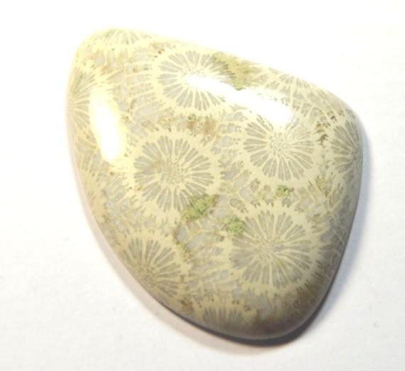 RARE 54 mm Fossil Coral cabochon 99ct