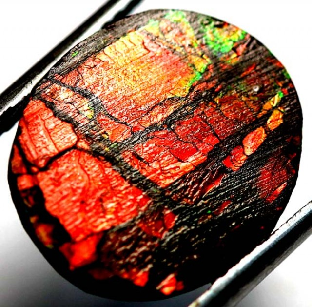 4.65  CTS CANADIAN AMMOLITE PREFINISHED  TBG-274