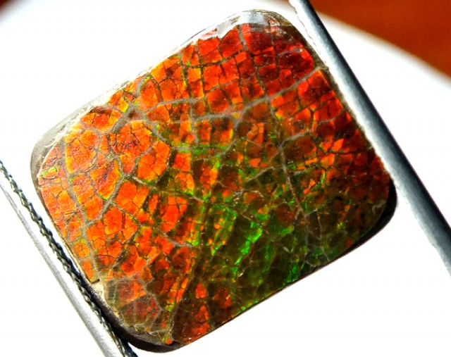 12.80  CTS CANADIAN AMMOLITE PREFINISHED   TBG-301