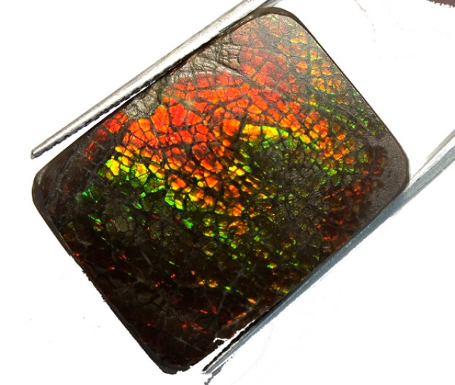 32.55  CTS CANADIAN AMMOLITE PREFINISHED    TBG-304