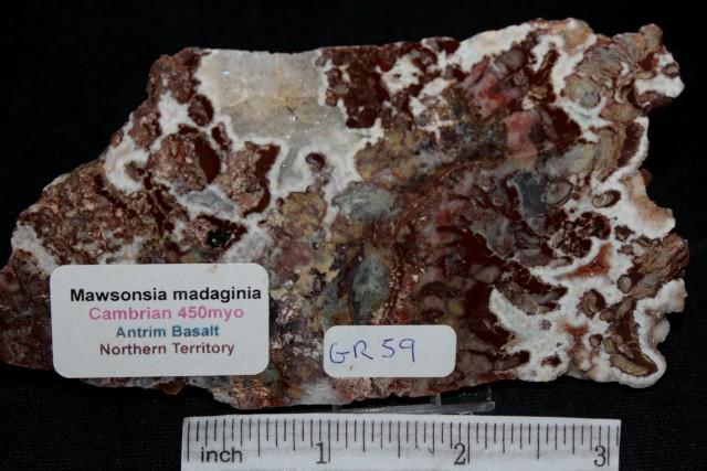 Stromatolite Madiganites mawsoni Slice Australia  (GR59)