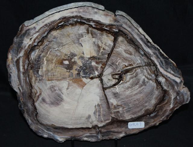 Petrified Opalised Wood Slice, Oligocene, Australia (GR67)