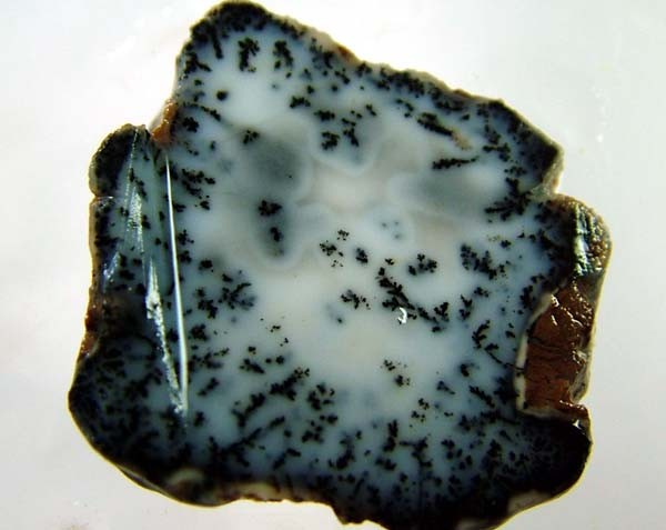 DENDRITIC OPAL -ROUGH  34CTS [MFJP2842]