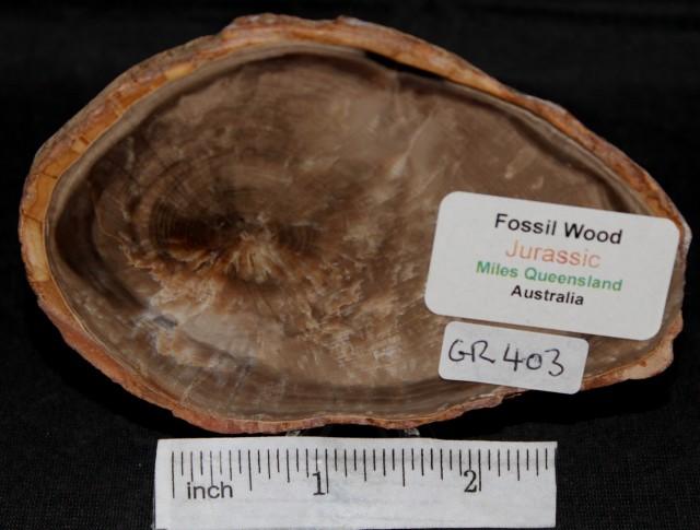 Fossil Wood Slice, Jurassic, QLD, Australia (GR403)