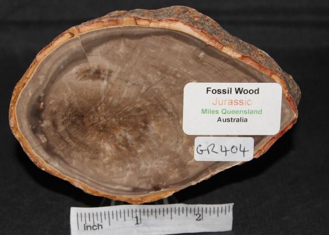 Fossil Wood Slice, Jurassic, QLD, Australia (GR404)