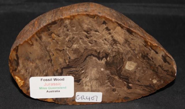 Fossil Wood Slice, Jurassic, QLD, Australia (GR407)