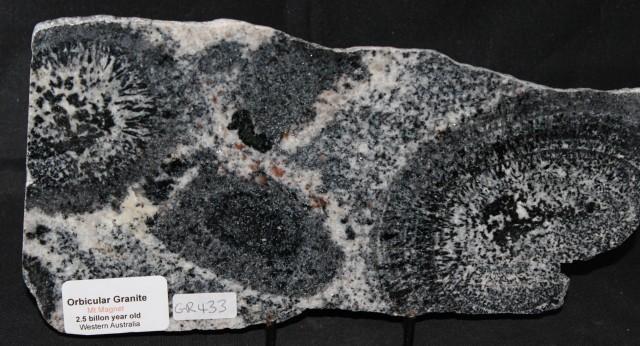 ORBICULAR GRANITE Slab, 2.5 byo AUSTRALIA (GR433)