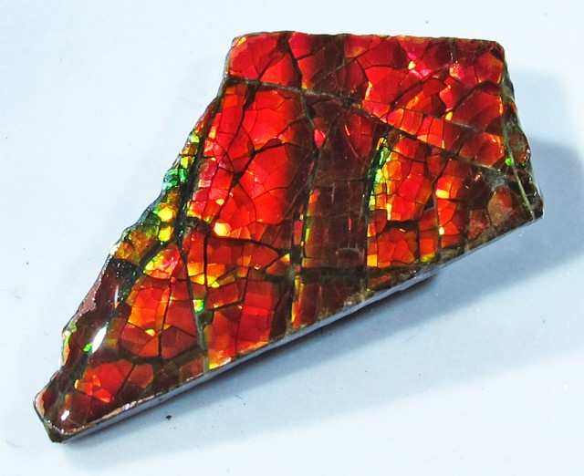 9.78 CTS AMMOLITE  ROUGH SPECIMEN FROM CANADA [F4751]