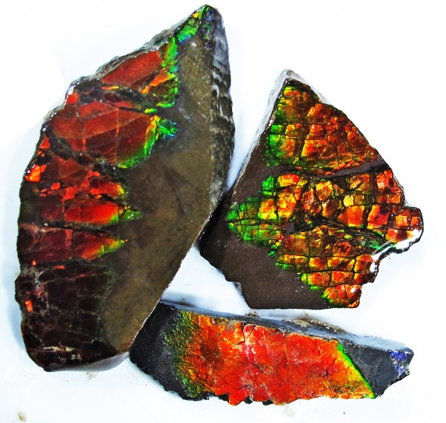48.19 CTS AMMOLITE  ROUGH PARCEL SPECIMEN FROM CANADA  F4779