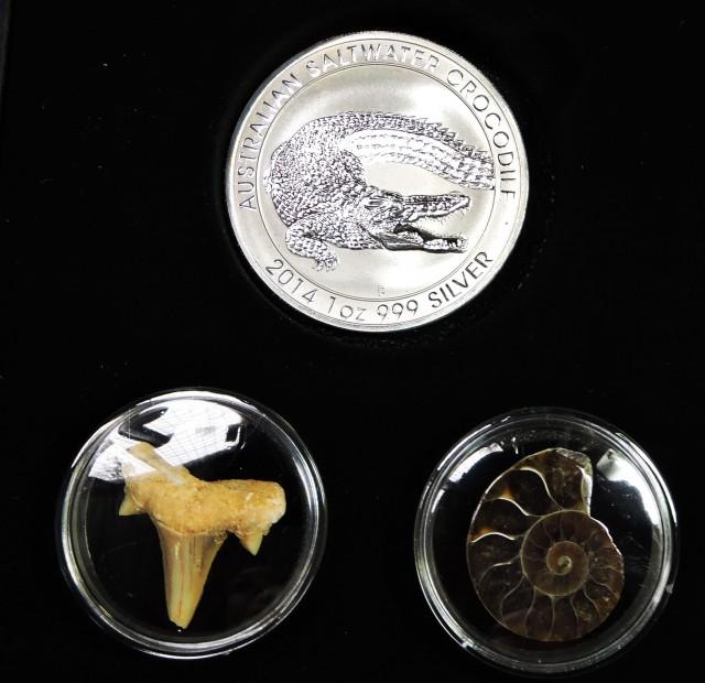 Wild World Series-Silver Salt Crocodile with Ammonite & Shark tooth CC1