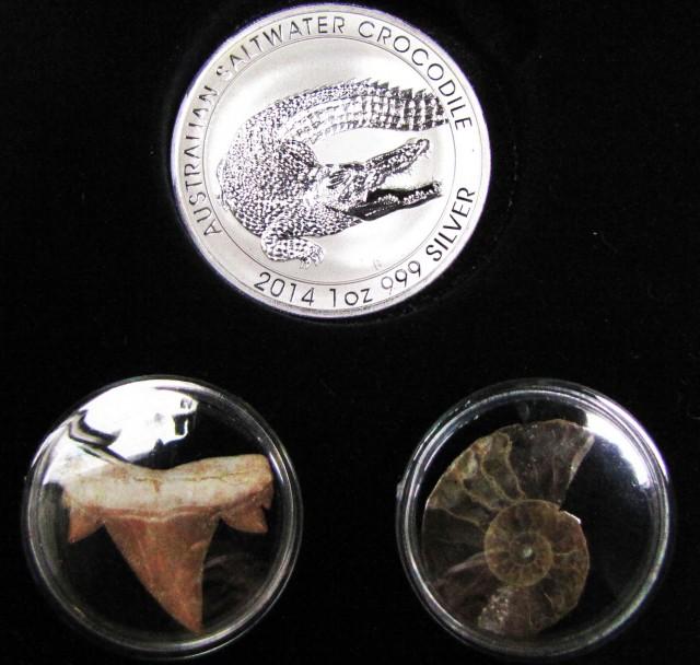 Silver Salt Crocodile with Ammonite & Shark tooth CC126