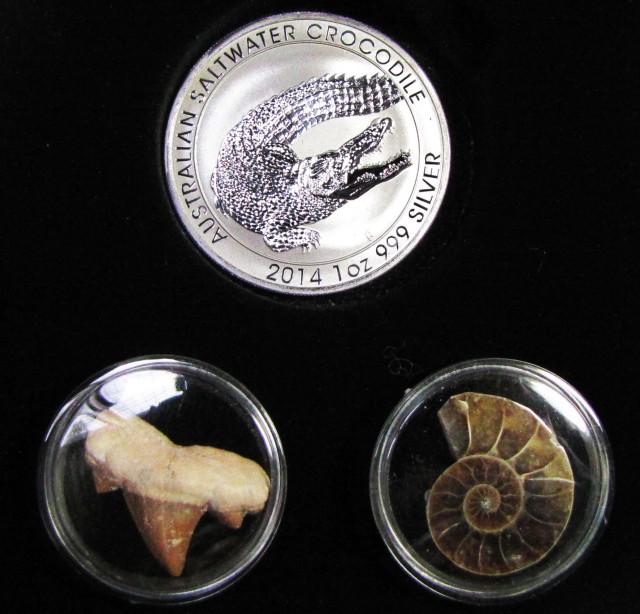 Silver Salt Crocodile with Ammonite & Shark tooth CC125