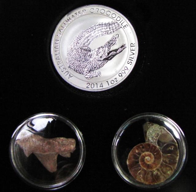 Silver Salt Crocodile with Ammonite & Shark tooth CC124