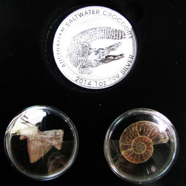 Silver Salt Crocodile with Ammonite & Shark tooth CC111