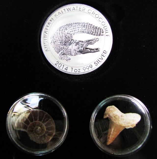 Silver Salt Crocodile with Ammonite & Shark tooth CC110