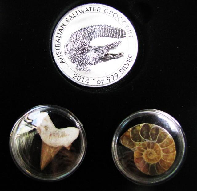 Silver Salt Crocodile with Ammonite & Shark tooth CC112