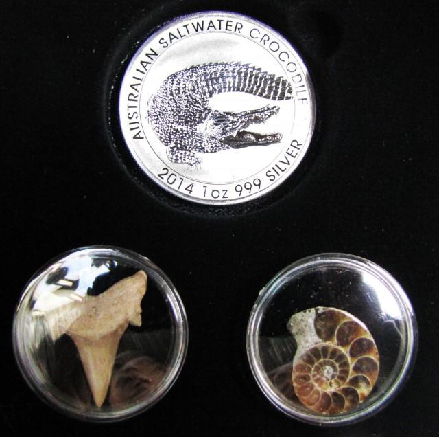 Silver Salt Crocodile with Ammonite & Shark tooth CC115