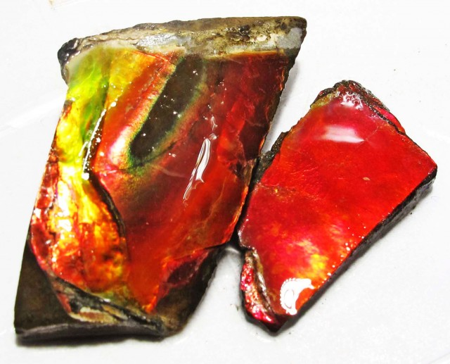 51.85 CTS AMMOLITE  ROUGH PARCEL SPECIMEN FROM CANADA  F5186
