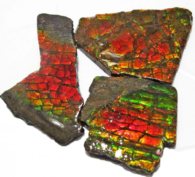 41.37 CTS AMMOLITE  ROUGH PARCEL SPECIMEN FROM CANADA  F5191