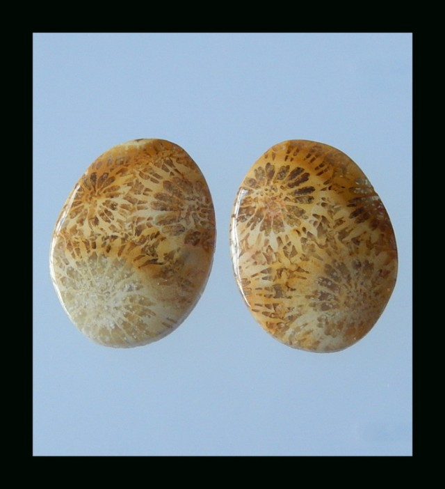 Indonesian Coral Fossil Cabochon pair - 21x16x3.5 MM