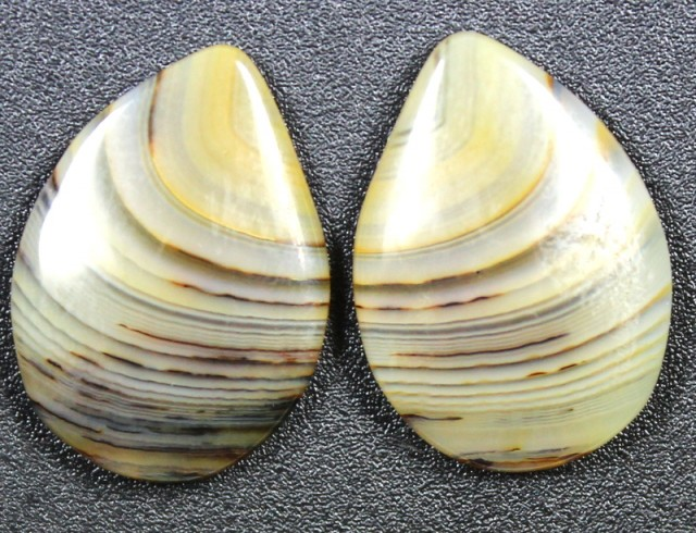 11.0 CTS WYOMING AGATE PAIR PERFECT FOR EARRINGS