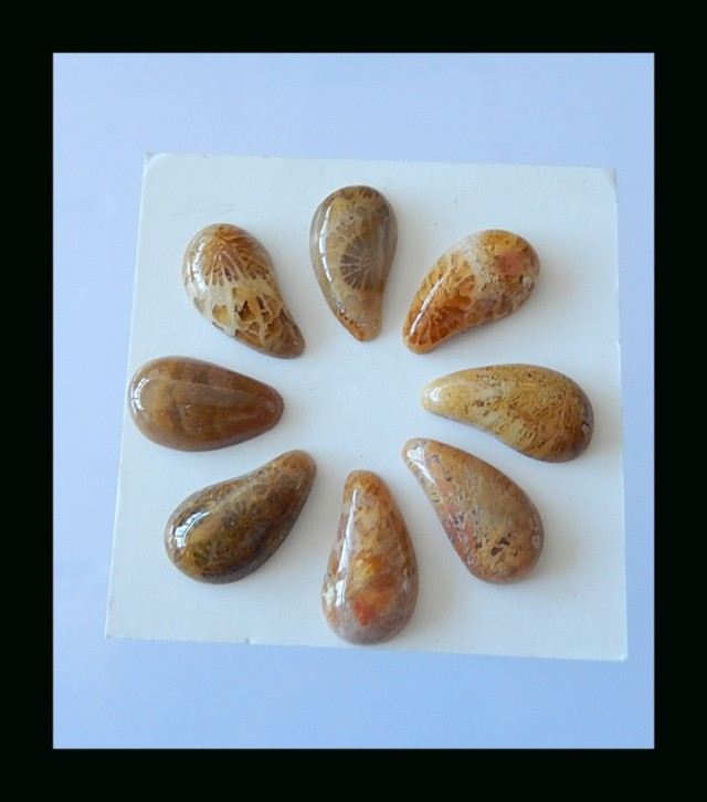 Specialoffer 8 pcs Indonesian Coral Fossil Cabochon Set -  12x7 MM,17.75 Ct