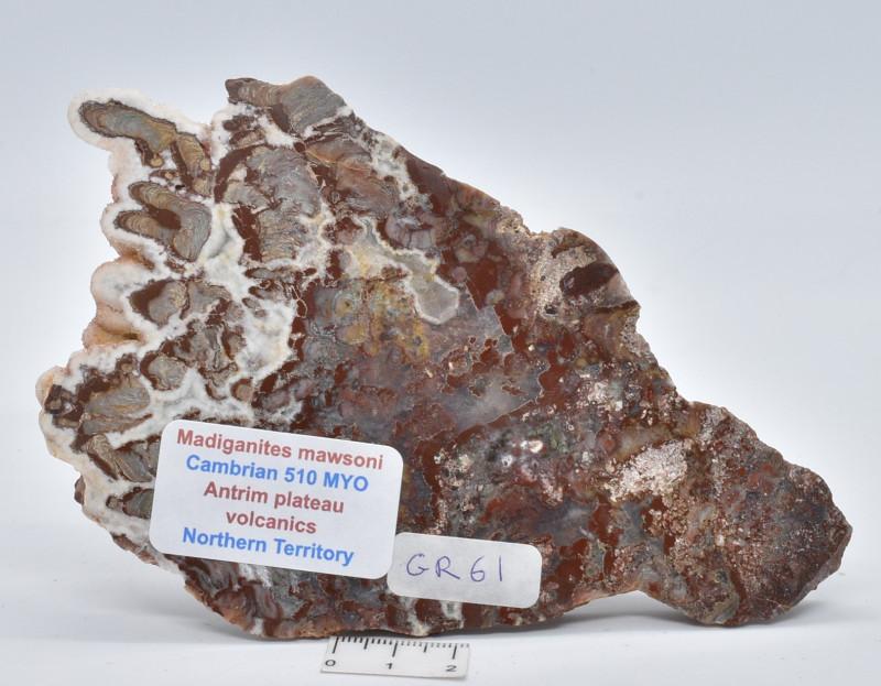 Stromatolite Madiganites mawsoni slice Australia (GR61)