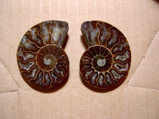 VERY NICE NATURAL AMMONITE SPLIT 55mm