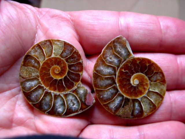 VERY NICE AMMONITE SPLIT 40mm