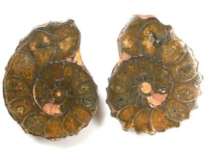 PAIR POLISHED CHELINOCERAS AMMONITE 162CARATS RA530