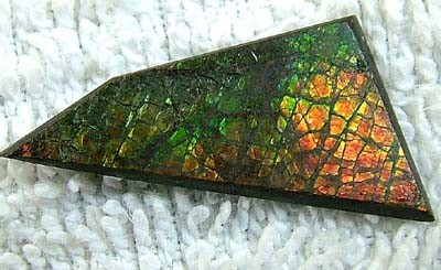(MGW) CANADIAN AMMOLITE 10 CTS FP 91