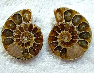 (MGW) SPECIMEN OF AMMONITE CHELINOCERAS 75 CTS FP 289