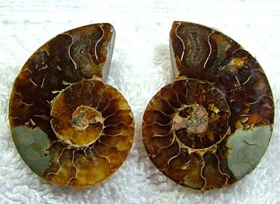 (MGW) LARGE SPECIMEN OF AMMONITE CHELINOCERAS 105 CTS FP 308