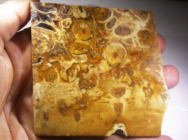 380.0 CTS BAMBOO ROOT  FOSSIL-CHINA [F6136]