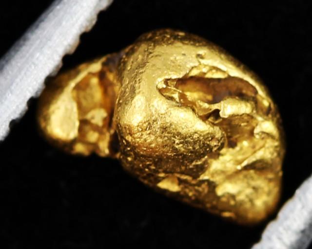 AUSTRALIAN  GOLD NUGGET    LGN 1287