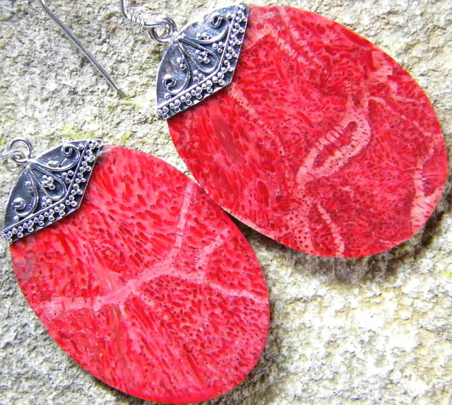 RED CORAL  EARRINGS -STABILIZED  23.05  CTS [SJ250]