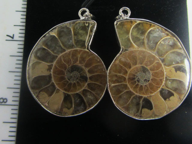 98 cts  TWIN AMMONITE PENDANT FROM MADAGASCAR MGMG 414