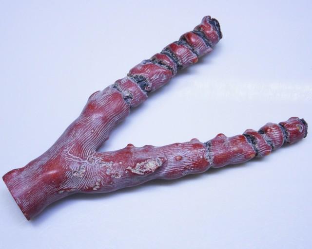 720Cts Natural red coral specimen   BU1719