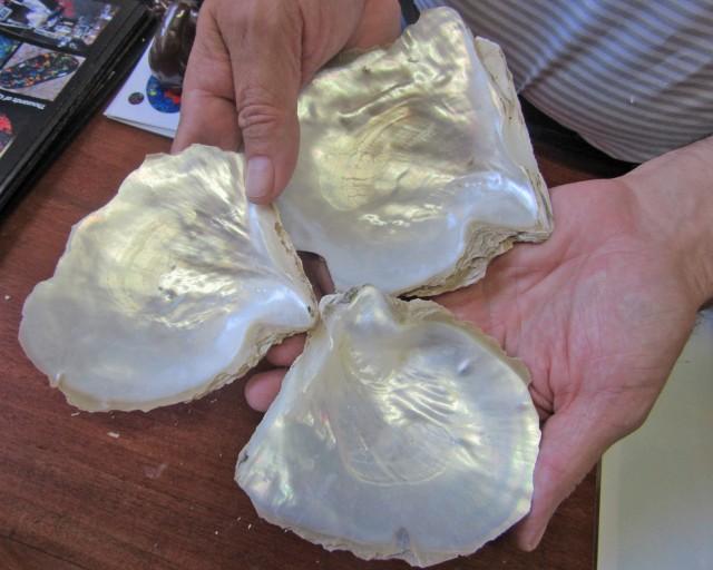 0.33 KILOS  THREE  Natural Broome Shells  BU2031