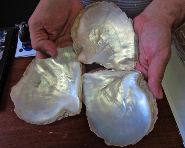 0.343KILO THREE  Natural Broome Shells  BU2032