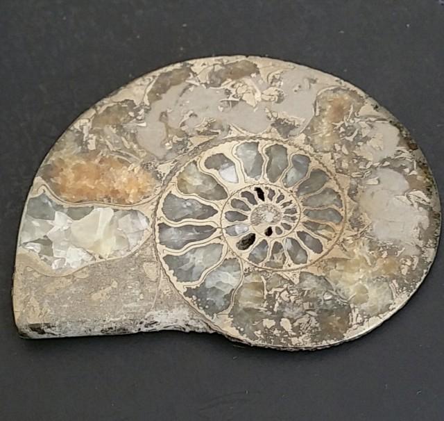 35mm Ammonite cabochon 40ct