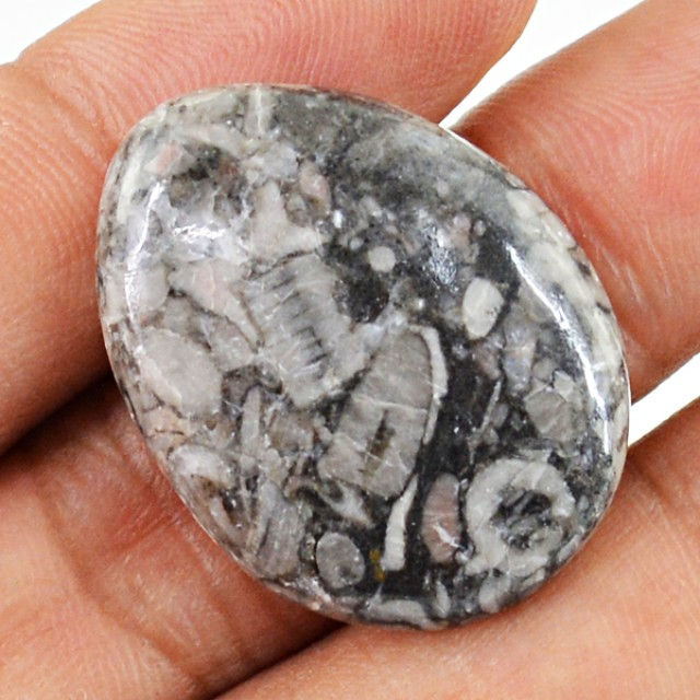 Genuine 29.65 Cts Crinoid Fossil Oval Shaped Cab