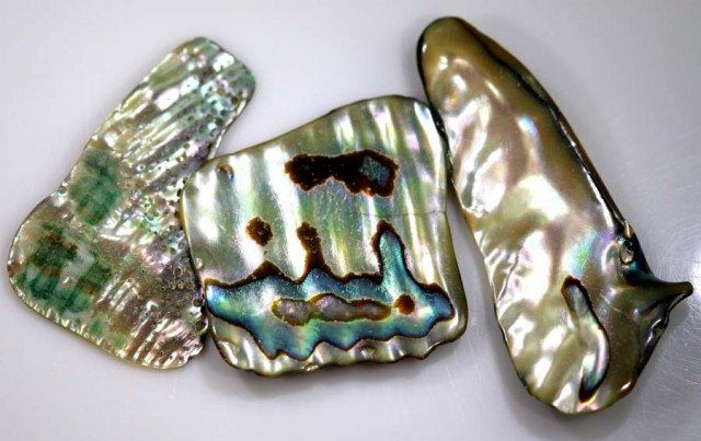 21.45 CTS ABALONE SHELL PARCEL (3PCS) ADG-1374