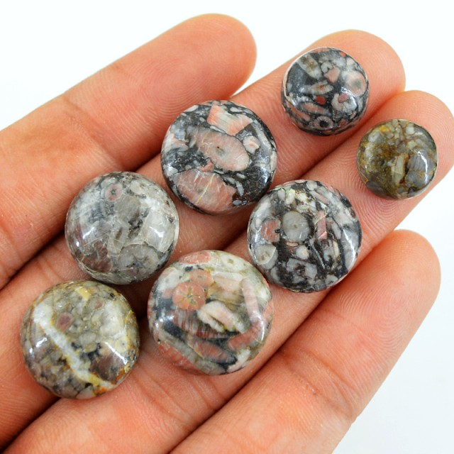 Genuine 62.70 Cts Crinoid Fossil Round Shaped Cab Lot