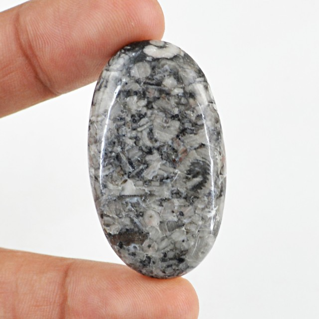 Genuine 49.60 Cts Oval Shaped Crinoid Fossil Cab