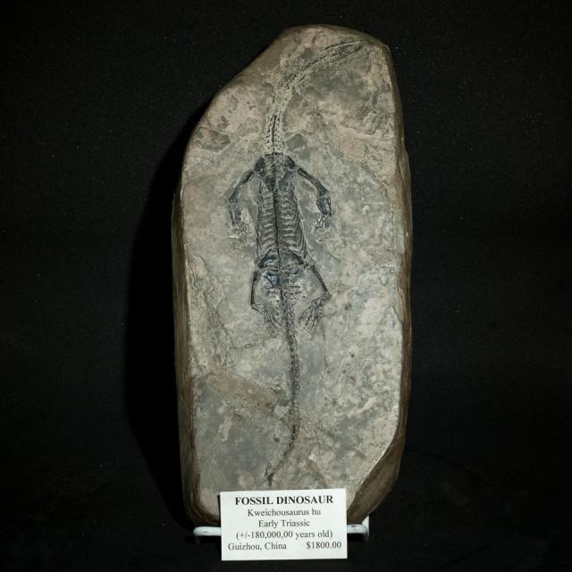 Kweichousaurus Complete Skeleton...I'm old.