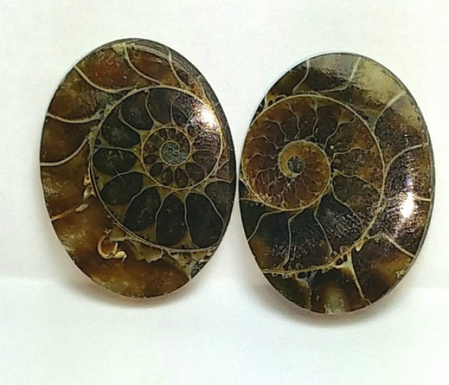 reserved 29 mm Ammonite cabochon pair oval shape
