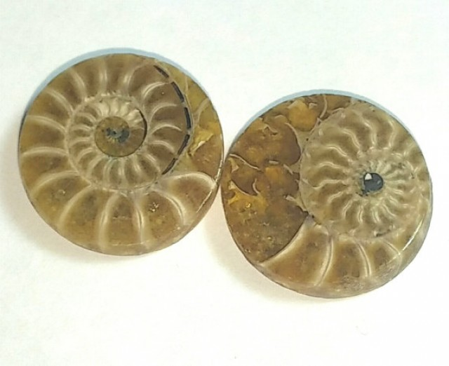 18mm round Ammonite Pair