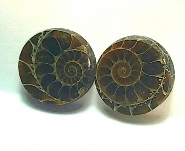 18mm Ammonite Pair round shape
